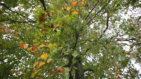 Colorful Autumn Leaves With Strong Wind stock footage
