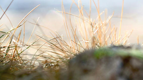 Closeup of grasses in the wind, part 2 Footage