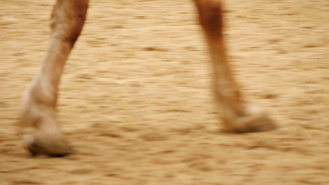 Close up of horse feet, hoof Footage