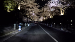 Crowd gathering to watch the illuminated cherry blossoms and Tokyo nightscape ビデオ