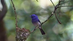The bird feeds baby birds GIF