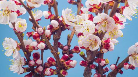 Spring Flowers 0