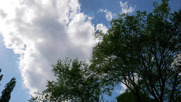 Time Lapse: Blue Cloudy Sky With Fast Moving White Clouds And Trees Footage