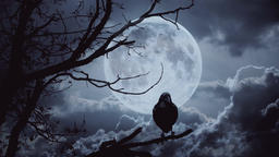 Raven sitting on the branch at night full moon Footage