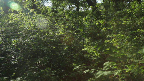 Panorama, play of sun through new fresh green leaves. Solar glare in the lens Footage