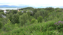 North Europe Norway Saltstraumen green meadows and trees in the fjord Footage