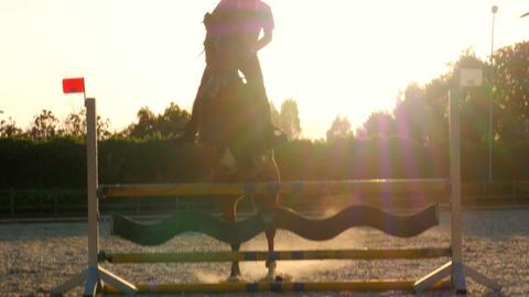 Horse jumping hurdle at sunset Footage