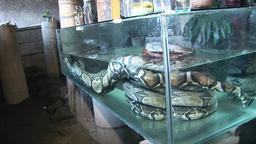 Huge python in aquarium water Footage