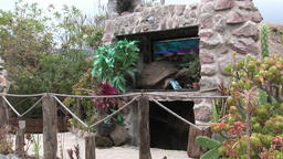 Stuffed animals turtle in hut indigenous Guarani Indians and Shuar Footage