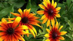 Flowers summer summer flowers Footage