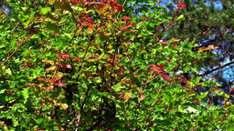 Leaves autumn background 영상물