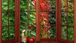 Maple window golden autumn Footage
