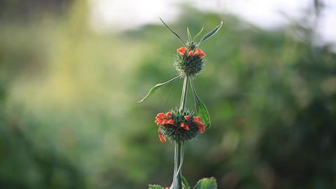 Botany thistle flower blossom Live Action
