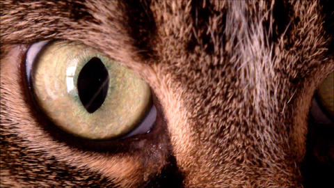 A close up of a cats eye Footage