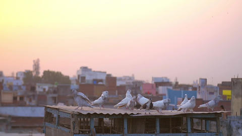 Birds on a rooftop in an urban part of india Footage