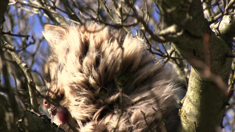Cat on a tree on a sunny day Live Action