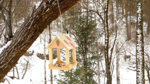 Bird feeder in the park GIF