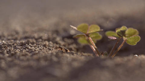 Macro slow motion shot of an ant leaving its hill 영상물