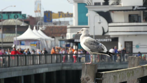Shot of Sea Gulls landing on a pier Live Action