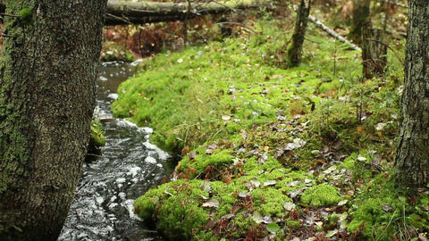 meandering creek in the autumn forest Footage