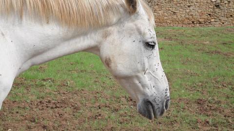 Horse head Footage