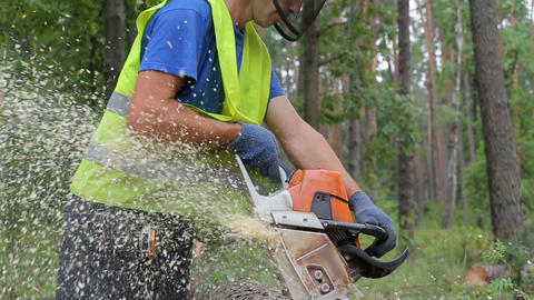 Woodcutter cuts tree trunk using chainsaw before transportation Footage