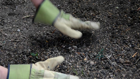 gardening Stock Video Footage