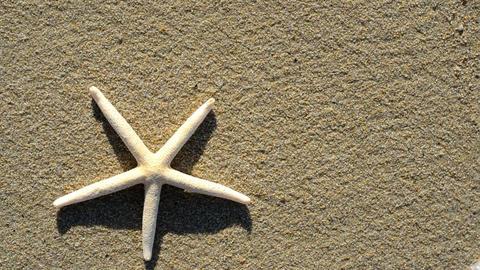 starfish Stock Video Footage
