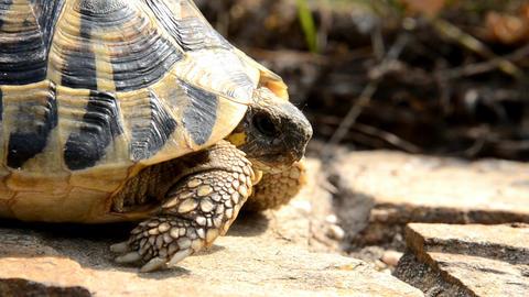 tortoise Footage