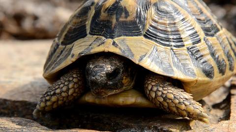 tortoise Stock Video Footage