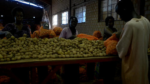 African farmer Stock Video Footage