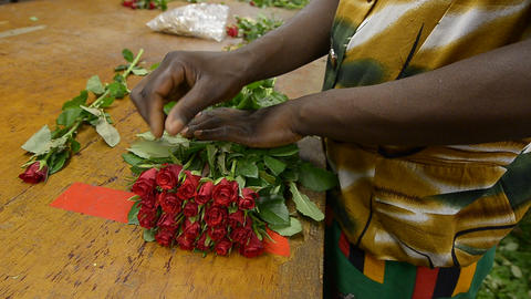 flowers industry Stock Video Footage