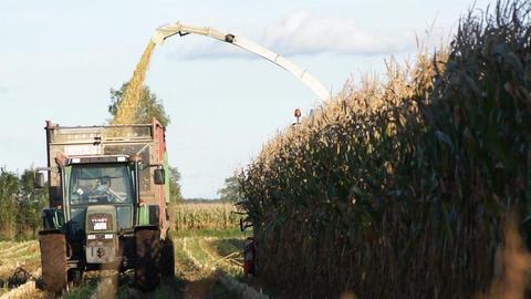 Con Harvesting Footage