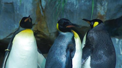 Penguins Footage