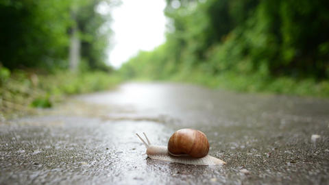 Snail Movement-Time Lapse Footage