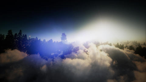 aerial over clouds in pine tree highland forest 영상물