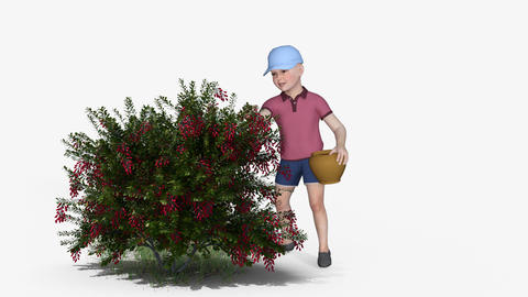 The Boy Collects Berries From A Berry Bush, Animation, Alpha Channel Animation
