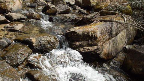 Fix : A brook flowing through the sunny forest ライブ動画