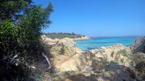 Plants by the sea in Spiaggia del Principe in Costa Smeralda. Sardinia, Italy 영상물