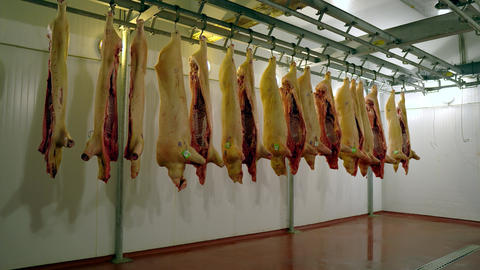 closeup view of raw pork meat hanging on hooks in a meat factory food nutrition Live Action
