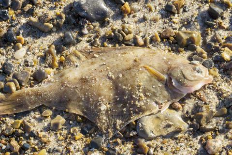 Flatfish Fotografía