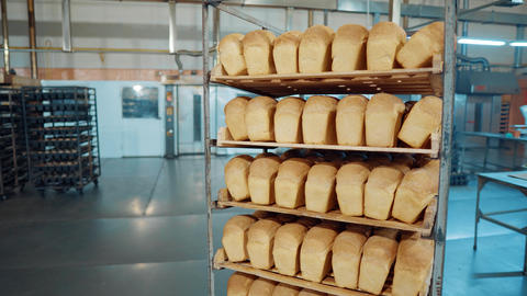 Bread fresh baked bun bread bakery food factory production with fresh products Live Action