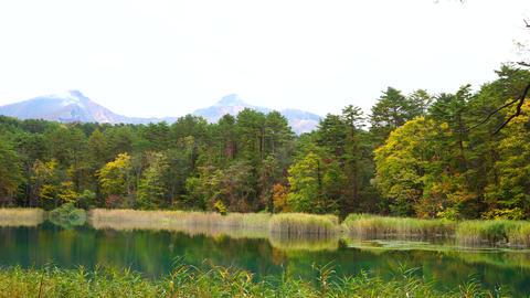 Autumn pond Live Action