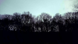 Winter Trees Landscape stock footage