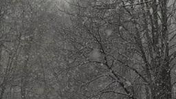 Snow (slow Motion) Color 2