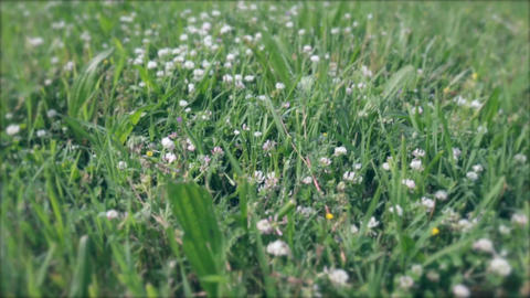 Grass and flowers 영상물