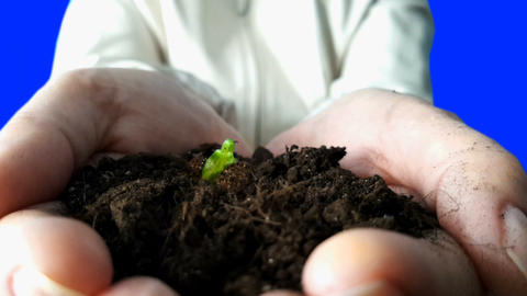 Seedling Growing In Hands. Time Lapse Footage