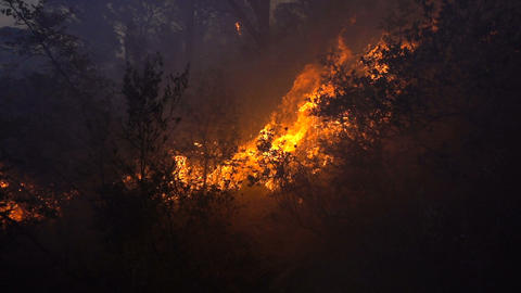 Fire storm in the forest at dusk Footage