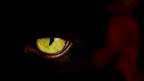 4K shot of a black cat with extremely yellow eyes Footage