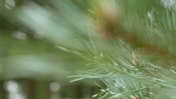 Fern branches move gently Footage